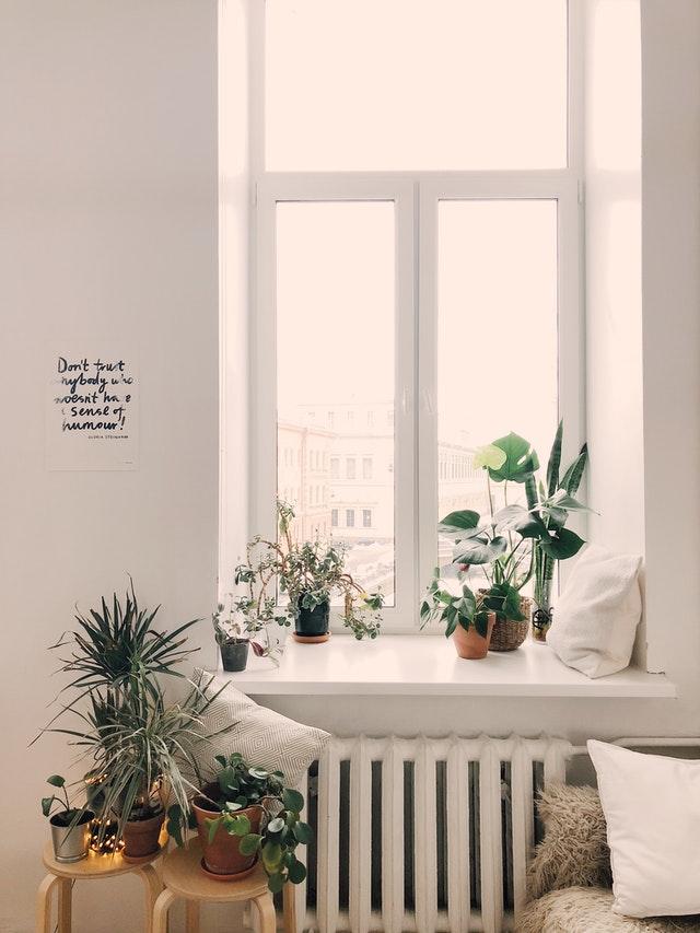 modne rośliny doniczkowe